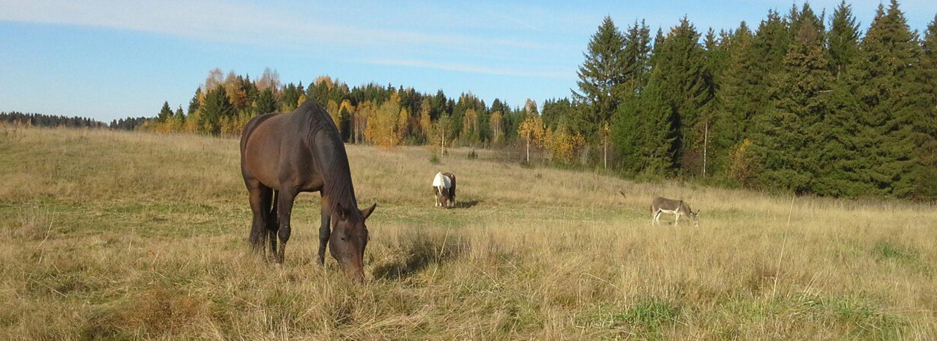 Мечта о создании лошадиного заповедника